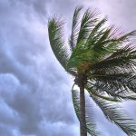 Palm tree in storm